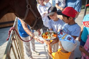 кормление лошадей